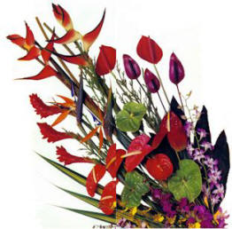 http://www.volcanogallery.com/flowers/flower_boxes.jpg
